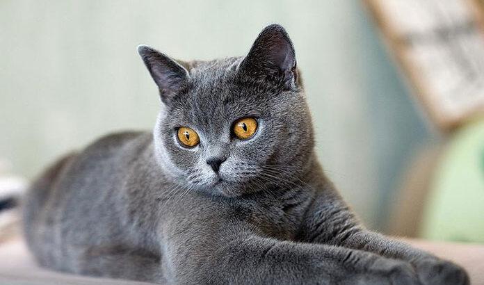 Karmy dla kota – jak sprostać wszystkim potrzebom mruczącego przyjaciela?